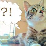 衝撃転身の元タカラジェンヌは誰?北海道で牧場経営をしている美雪花代(みゆきはなよ)か?【あいつ今何してる?】